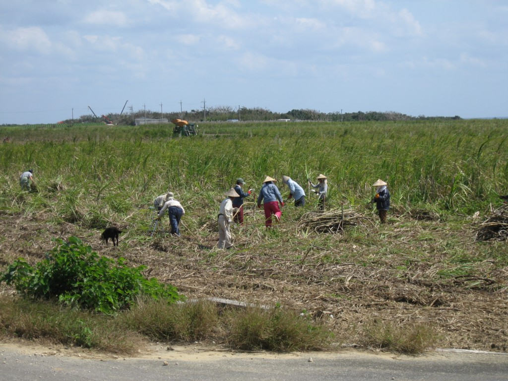 Workers in the sugarcane fields
